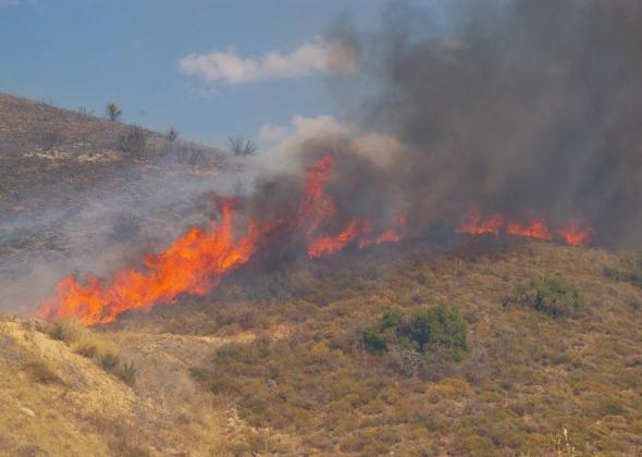 Φωτιά στα Πικουλιάνικα Σπάρτης | in.gr